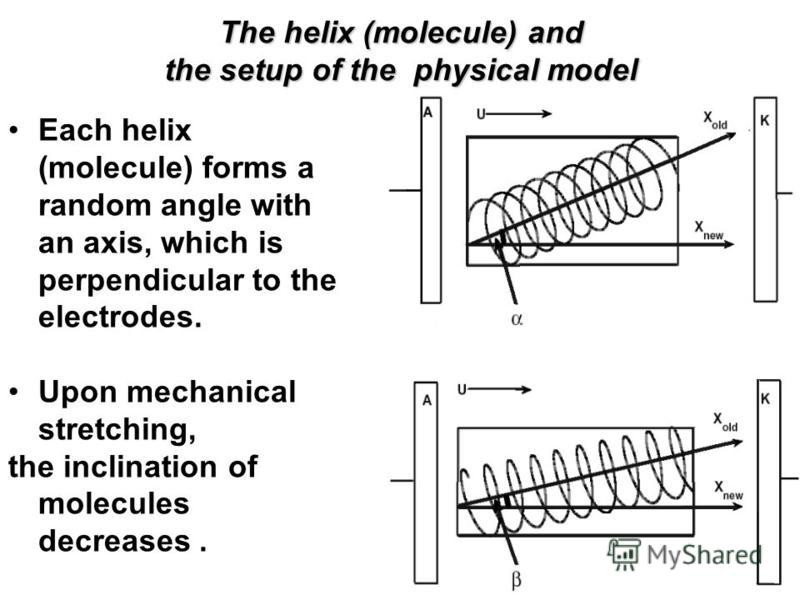 The helix (molecule) and the setup of the physical model Each helix (molecule) forms a random angle with an axis, which is perpendicular to the electrodes. Upon mechanical stretching, the inclination of molecules decreases.