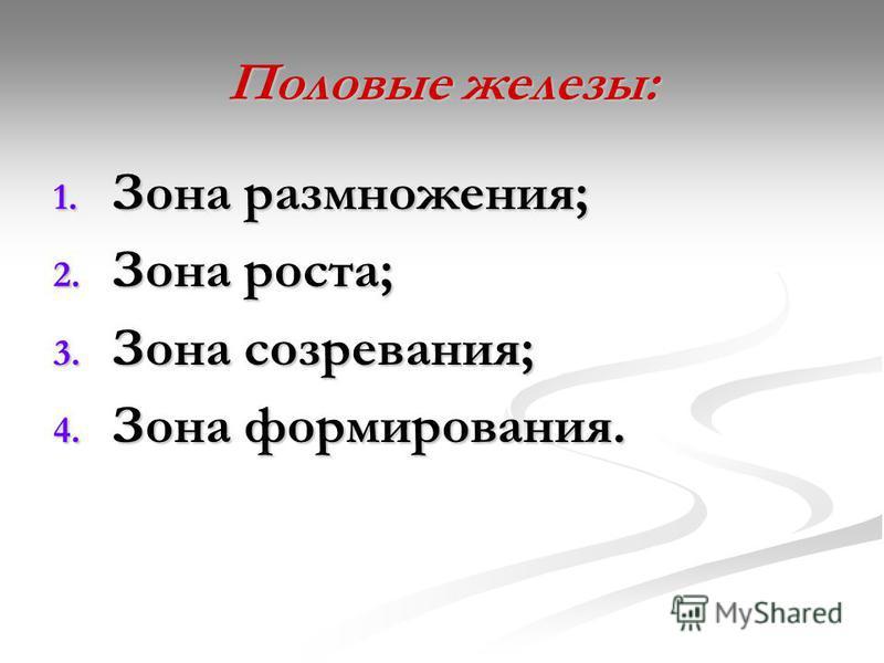 Половые железы: 1. Зона размножения; 2. Зона роста; 3. Зона созревания; 4. Зона формирования.