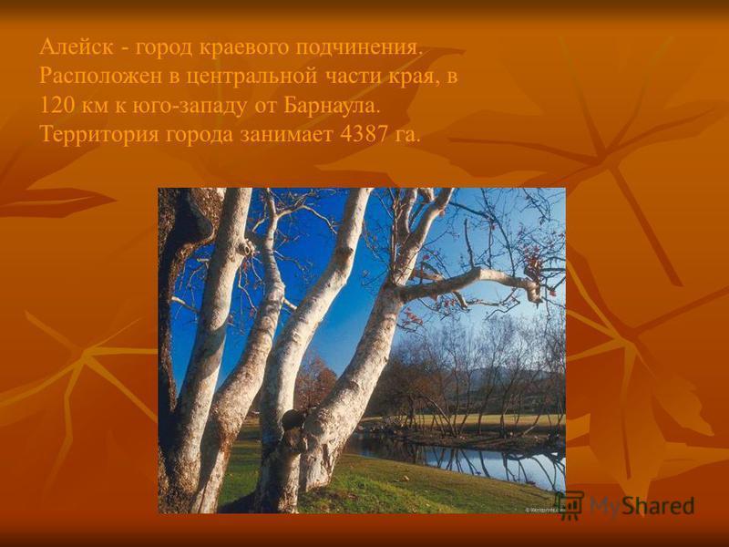 Алейск - город краевого подчинения. Расположен в центральной части края, в 120 км к юго-западу от Барнаула. Территория города занимает 4387 га.