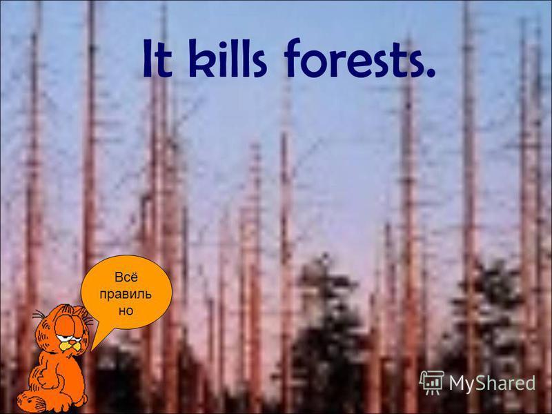 Всё правиль но It kills forests.