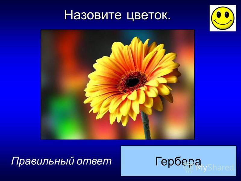 Гербера Правильный ответ Назовите цветок.