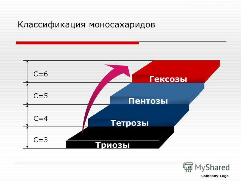 www.themegallery.com Company Logo Классификация моносахаридов С=6 С=5 С=4 С=3 Гексозы Пентозы Тетрозы Триозы