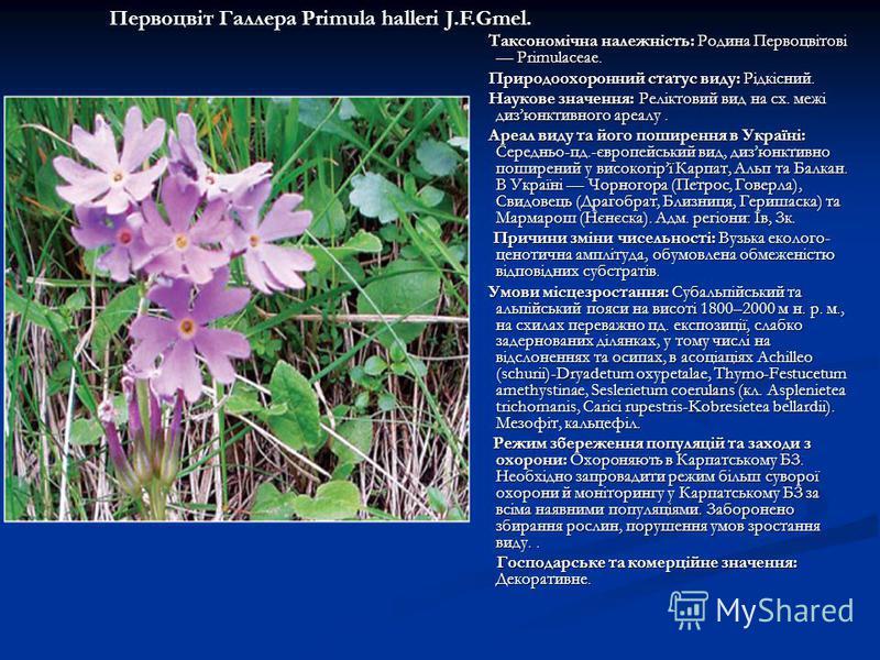 Таксономічна належність: Родина Первоцвітові Primulaceae. Таксономічна належність: Родина Первоцвітові Primulaceae. Природоохоронний статус виду: Рідкісний. Природоохоронний статус виду: Рідкісний. Наукове значення: Реліктовий вид на сх. межі дизюнкт