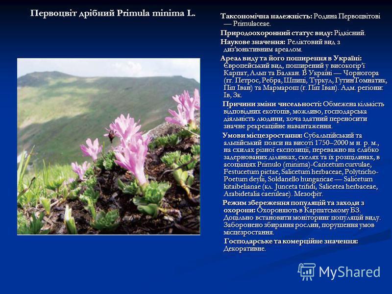 Таксономічна належність: Родина Первоцвітові Primulaceae. Таксономічна належність: Родина Первоцвітові Primulaceae. Природоохоронний статус виду: Рідкісний. Природоохоронний статус виду: Рідкісний. Наукове значення: Реліктовий вид з дизюнктивним ареа