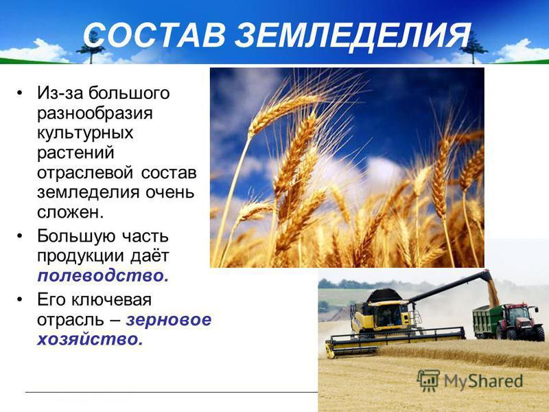 СОСТАВ ЗЕМЛЕДЕЛИЯ Из-за большого разнообразия культурных растений отраслевой состав земледелия очень сложен. Большую часть продукции даёт полеводство. Его ключевая отрасль – зерновое хозяйство.