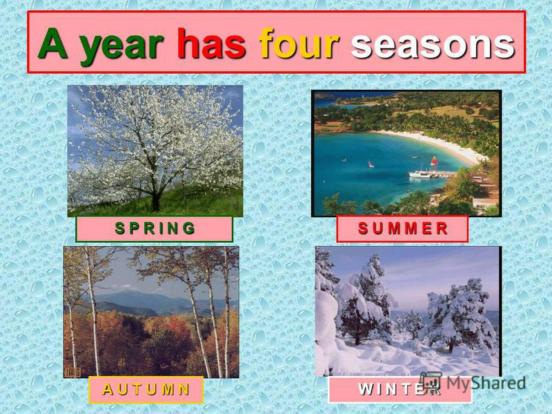 A year has four seasons S P R I N G S U M M E R A U T U M N W I N T E R