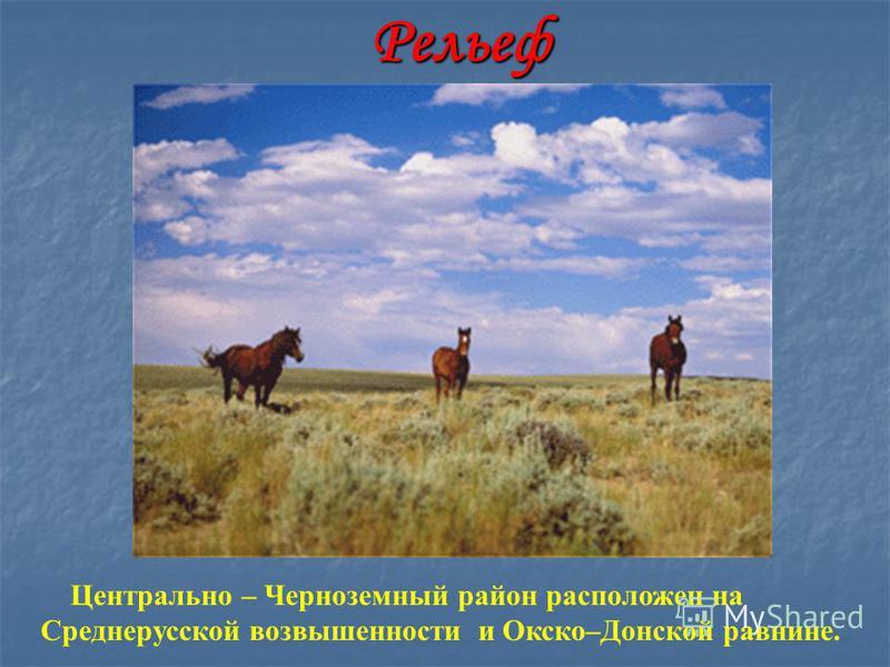 Рельеф Центрально – Черноземный район расположен на Среднерусской возвышенности и Окско–Донской равнине.