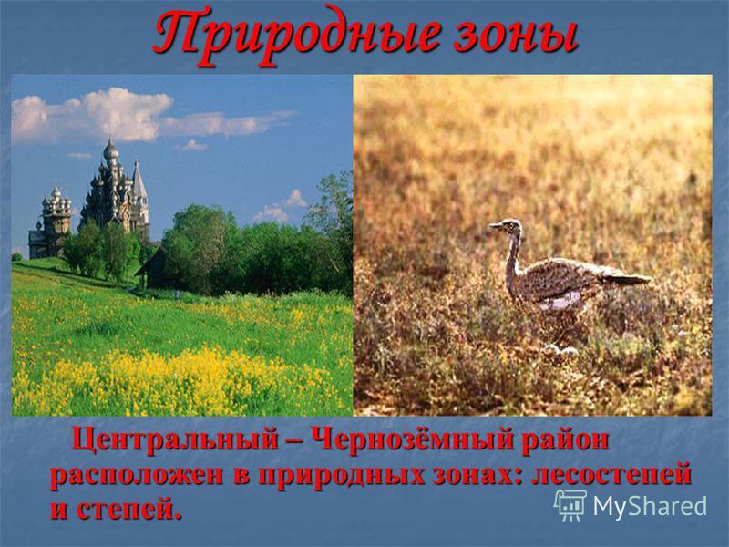 Природные зоны Центральный – Чернозёмный район расположен в природных зонах: лесостепей и степей. Центральный – Чернозёмный район расположен в природных зонах: лесостепей и степей.