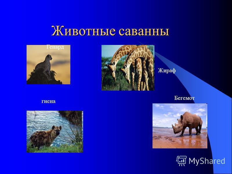 Животные саванны Животные саванны Гепард гиена Жираф Бегемот