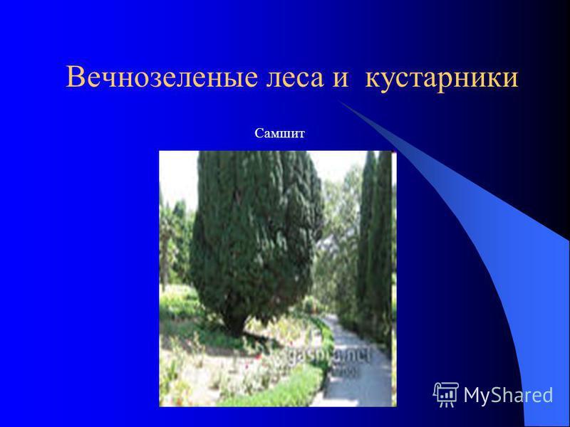 Вечнозеленые леса и кустарники Самшит