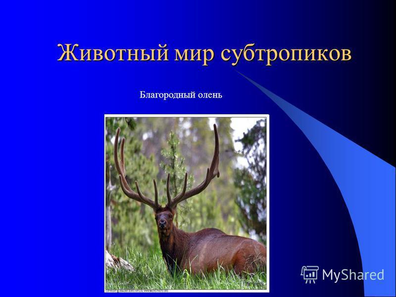 Животный мир субтропиков Благородный олень