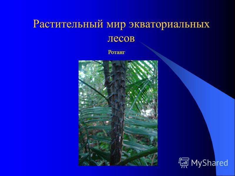 Растительный мир экваториальных лесов Ротанг