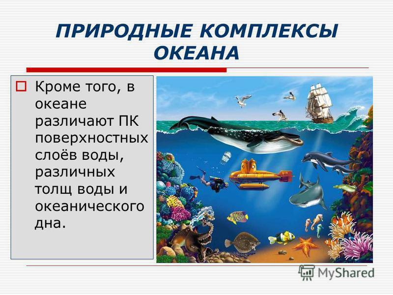 ПРИРОДНЫЕ КОМПЛЕКСЫ ОКЕАНА Кроме того, в океане различают ПК поверхностных слоёв воды, различных толщ воды и океанического дна.