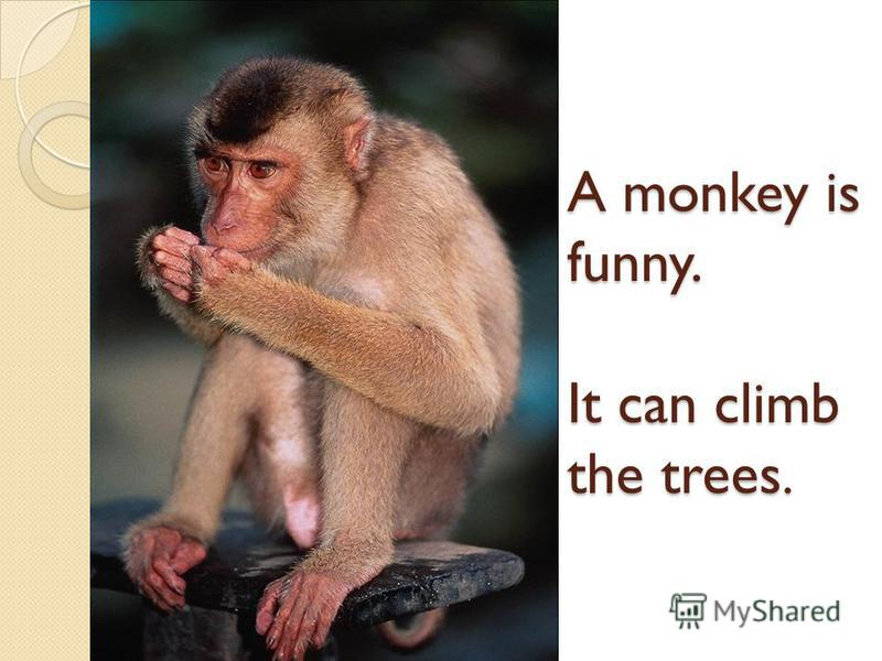 A monkey is funny. It can climb the trees.