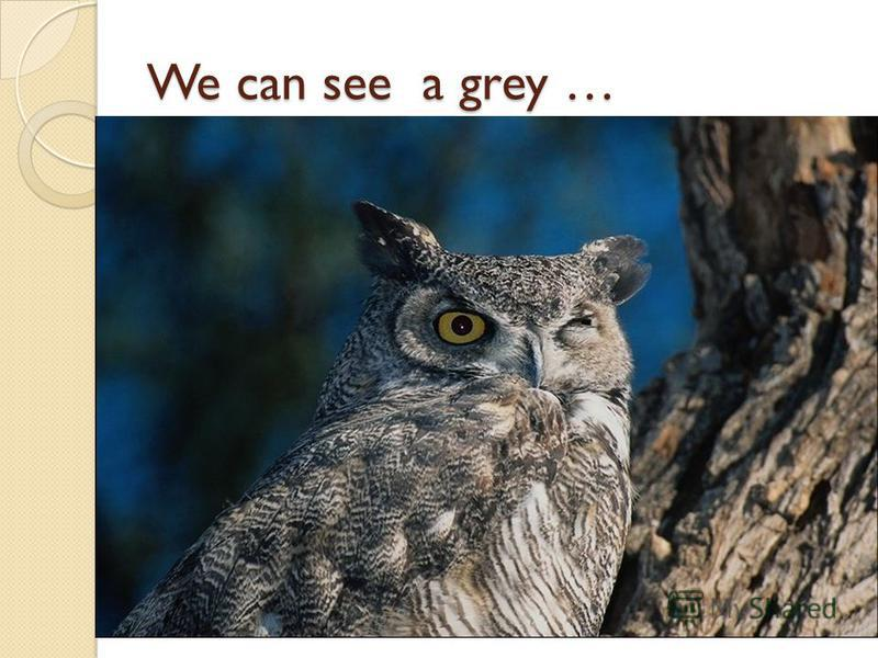 We can see a grey …