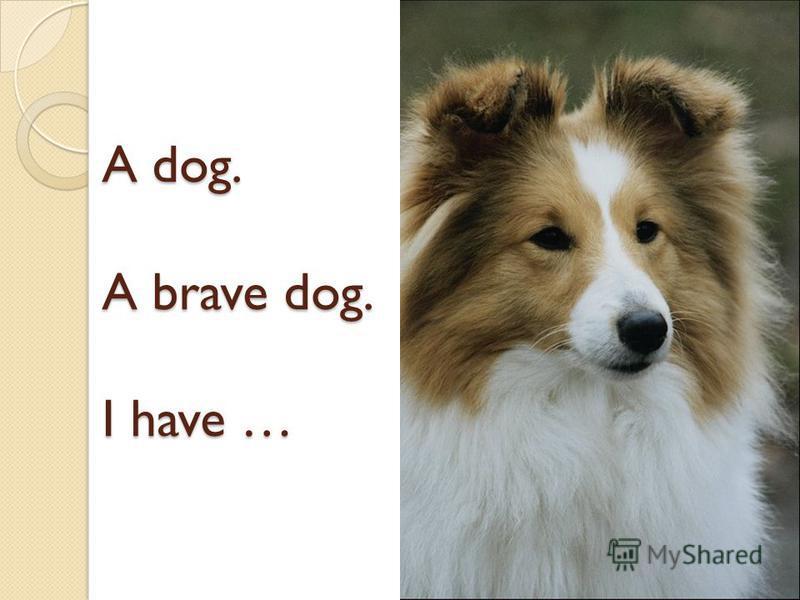 A dog. A brave dog. I have …