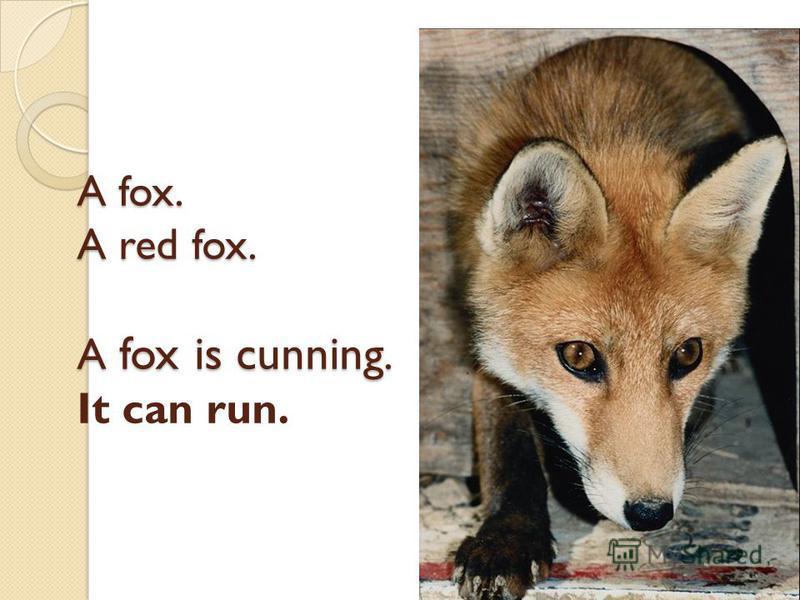 A fox. A red fox. A fox is cunning. A fox. A red fox. A fox is cunning. It can run.
