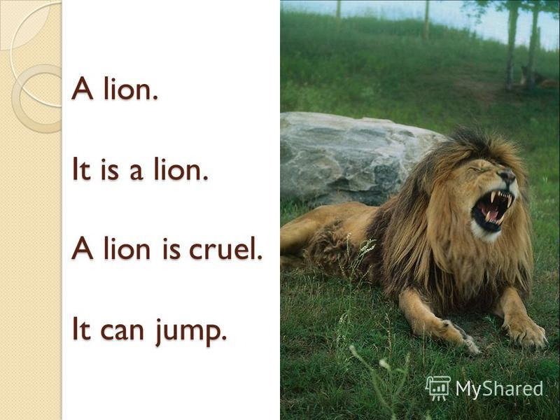 A lion. It is a lion. A lion is cruel. It can jump.