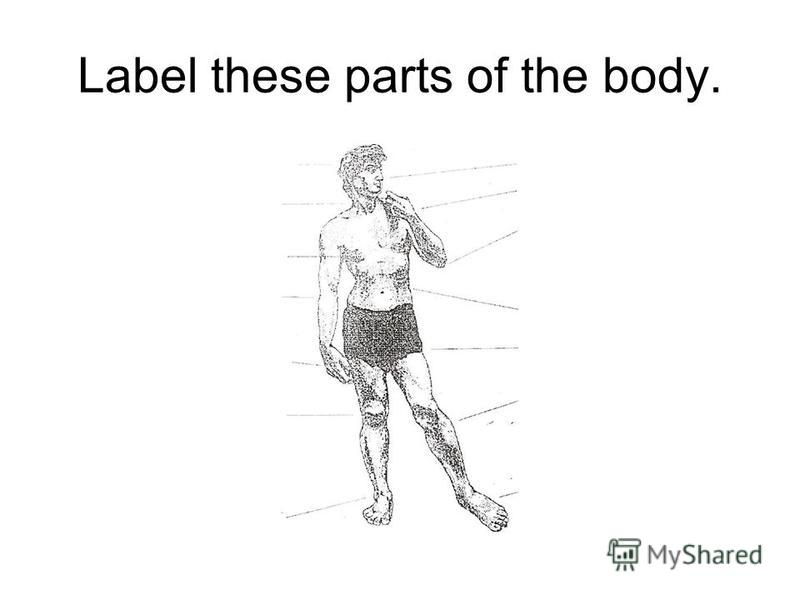 Label these parts of the body.