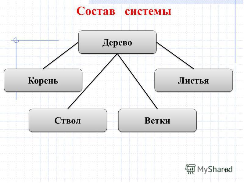 15 Состав системы Дерево Корень Листья Ствол Ветки
