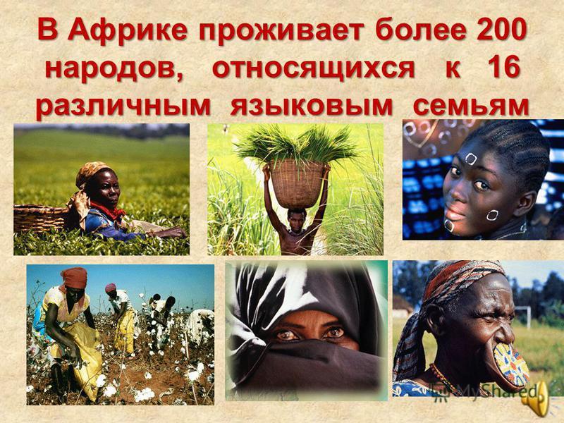 В Африке проживает более 200 народов, относящихся к 16 различным языковым семьям