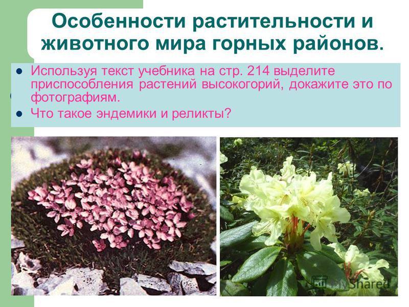 Особенности растительности и животного мира горных районов. Используя текст учебника на стр. 214 выделите приспособления растений высокогорий, докажите это по фотографиям. Что такое эндемики и реликты?
