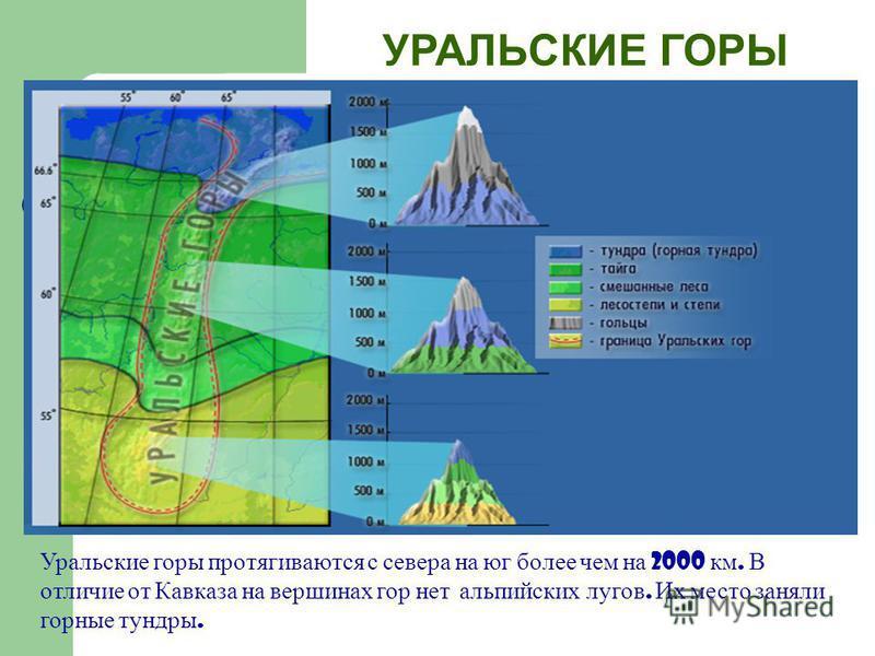 УРАЛЬСКИЕ ГОРЫ Уральские горы протягиваются с севера на юг более чем на 2000 км. В отличие от Кавказа на вершинах гор нет альпийских лугов. Их место заняли горные тундры.