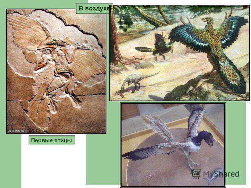 Первые птицы В воздухе