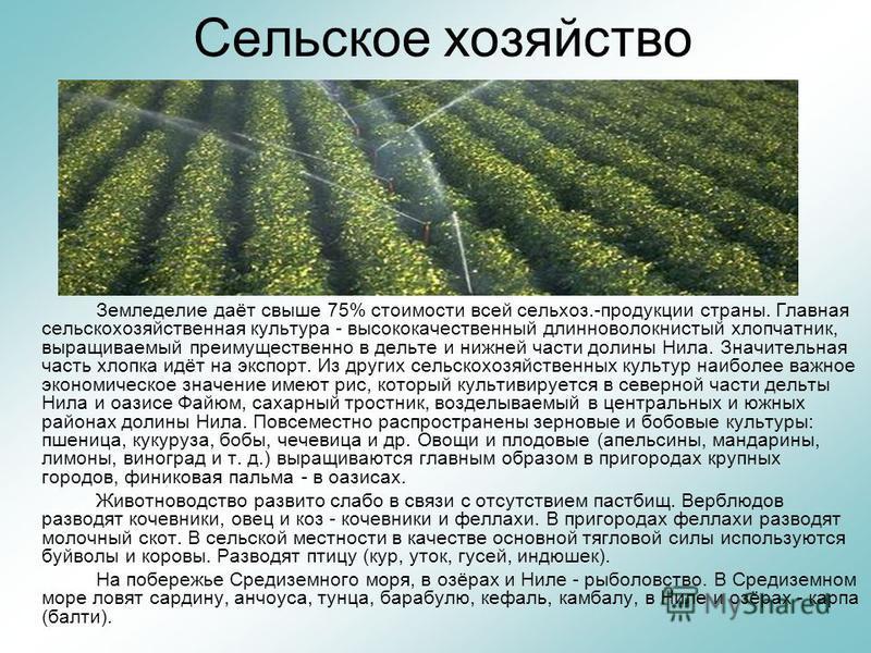 Сельское хозяйство Земледелие даёт свыше 75% стоимости всей сельхоз.-продукции страны. Главная сельскохозяйственная культура - высококачественный длинноволокнистый хлопчатник, выращиваемый преимущественно в дельте и нижней части долины Нила. Значител