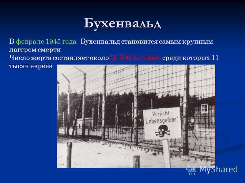 Бухенвальд В феврале 1945 года Бухенвальд становится самым крупным лагерем смерти Число жертв составляет около 56 000 человек, среди которых 11 тысяч евреев