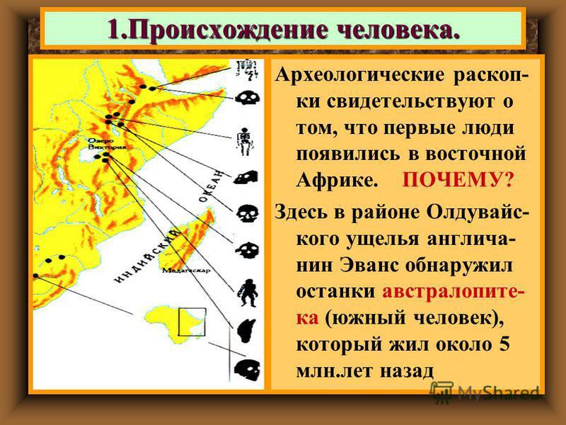 1. Происхождение человека. Археологические раскоп- ки свидетельствуют о том, что первые люди появились в восточной Африке. ПОЧЕМУ? Здесь в районе Олдувайс- кого ущелья англичанин Эванс обнаружил останки австралопитека (южный человек), который жил око