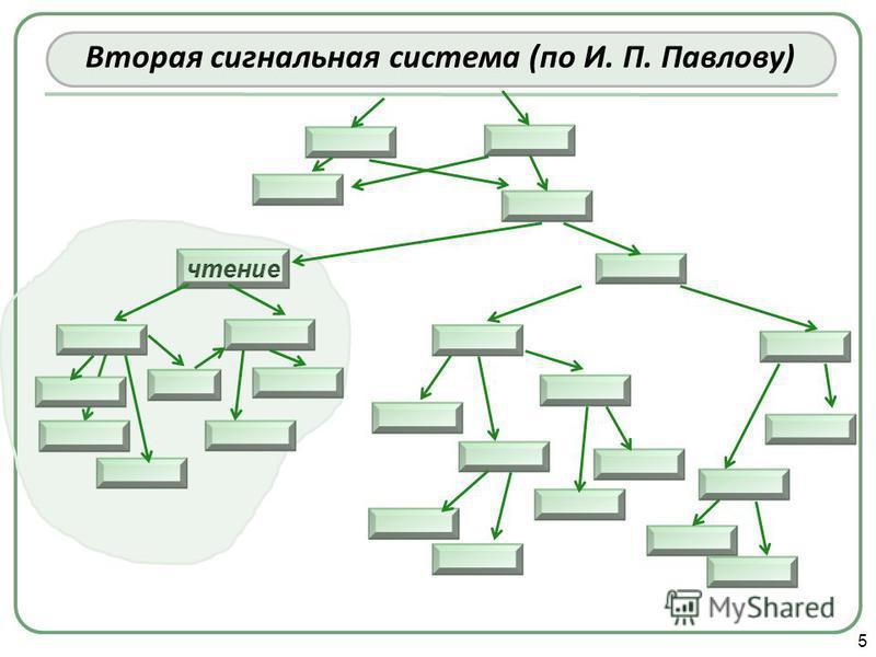 5 Вторая сигнальная система (по И. П. Павлову)
