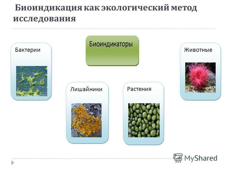 Биоиндикация как экологический метод исследования Бактерии Лишайники Растения Животные