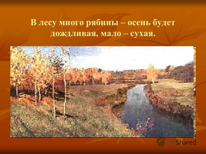 В лесу много рябины – осень будет дождливая, мало – сухая.