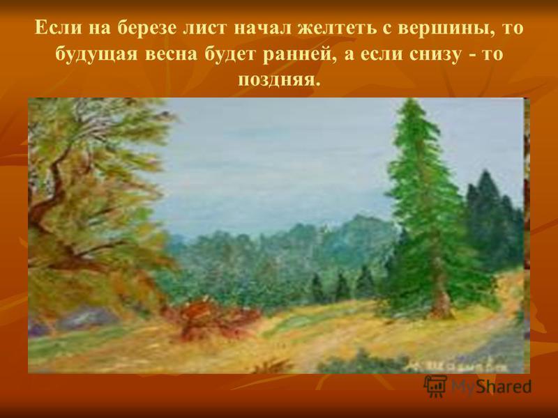 Если на березе лист начал желтеть с вершины, то будущая весна будет ранней, а если снизу - то поздняя.