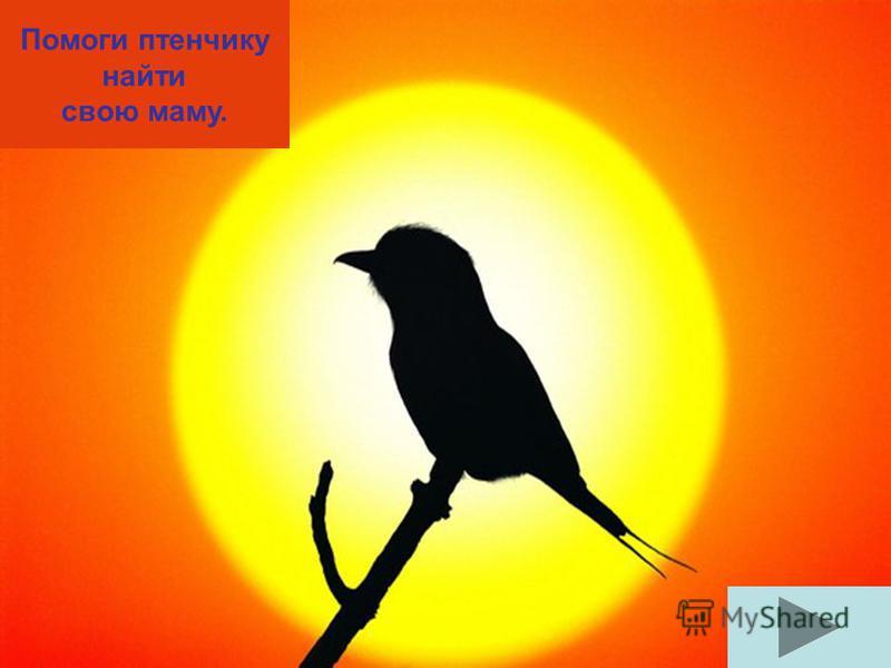 © Г Ацапина ЦЕЛЬ: упражнять в классификации птиц, Употреблении предлогов.