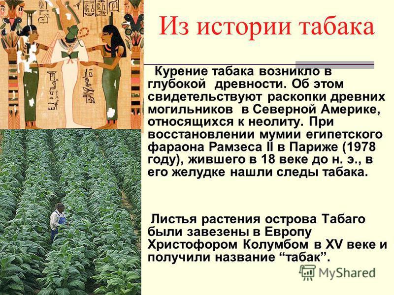 При восстановлении мумии египетского фараона Рамзеса II в Париже (1978 году), жившего в 18 веке до н. э., в его желудке нашли следы табака. Курение табака возникло в глубокой древности. Об этом свидетельствуют раскопки древних могильников в Северной