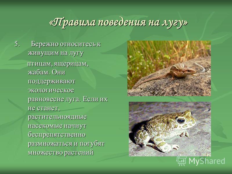 «Правила поведения на лугу» «Правила поведения на лугу» 5. Бережно относитесь к живущим на лугу 5. Бережно относитесь к живущим на лугу птицам, ящерицам, жабам. Они поддерживают экологическое равновесие луга. Если их не станет, растительноядные насек