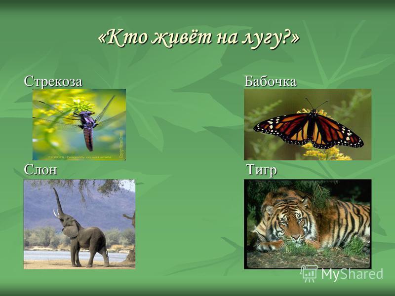 «Кто живёт на лугу?» Стрекоза Бабочка Слон Тигр