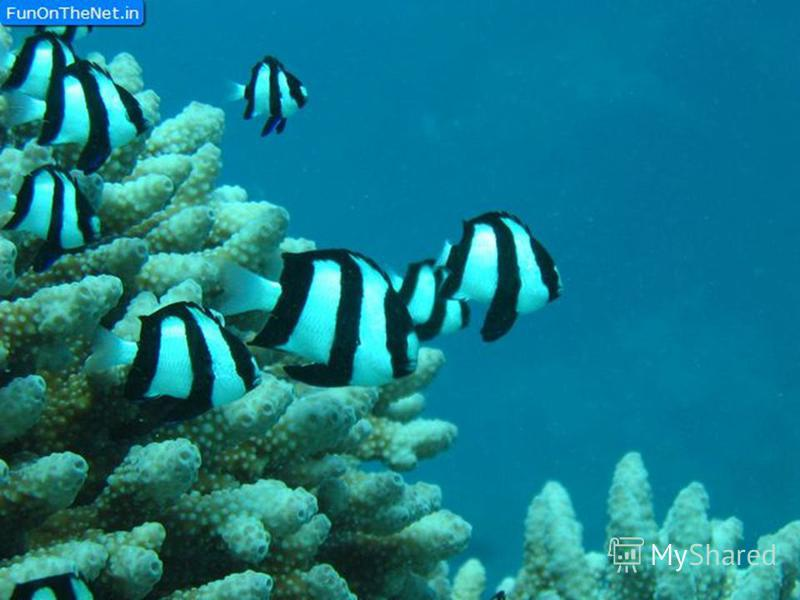 Why the Great Barrier Reef known all over the world? It is the longest coral reef in the world.