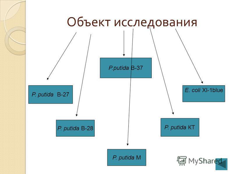 Цель работы : создание штамма P.putida B-37- продуцента АЦК - дезаминазы. Задачи : Определить ризосферную локализацию бактерий P. putida с помощью флюоресцентной микроскопии. Провести скрининг коллекции ризосферных бактерий P.putida на наличие гена a