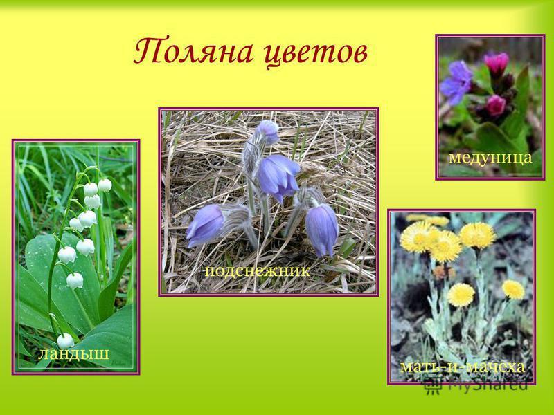 Поляна «Хоровод деревьев» Не руби берёзы белой, Не губи красы лесной, Не губи и зла не делай, А особенно весной.