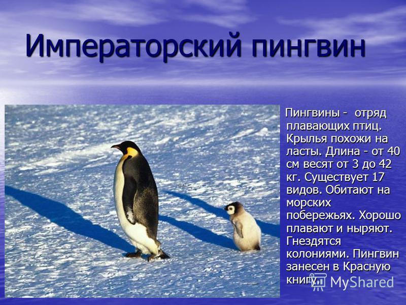 Императорский пингвин Пингвины - отряд плавающих птиц. Крылья похожи на ласты. Длина - от 40 см весят от 3 до 42 кг. Существует 17 видов. Обитают на морских побережьях. Хорошо плавают и ныряют. Гнездятся колониями. Пингвин занесен в Красную книгу. Пи