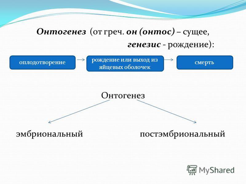 Онтогенез (от греч. он (сантос) – сущее, генезис - рождение): Онтогенез эмбриоанальный постэмбриоанальный оплодотворение рождение или выход из яйцевых оболочек смерть