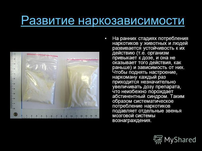 Развитие наркозависимости На ранних стадиях потребления наркотиков у животных и людей развивается устойчивость к их действию (т.е. организм привыкает к дозе, и она не оказывает того действия, как раньше) и зависимость от них. Чтобы поднять настроение