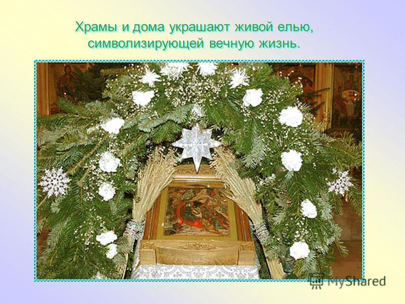 Храмы и дома украшают живой елью, символизирующей вечную жизнь.