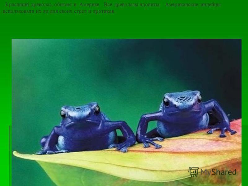 16 Ну, очень маленькая лягушка - Noblella. Одна из самых маленьких в мире лягушек обитает высоко в Андах на высоте 3 – 3,19 тысяч метров. Женские особи вырастают максимум до 12,4 мм, мужские - лишь до 11,1 мм.