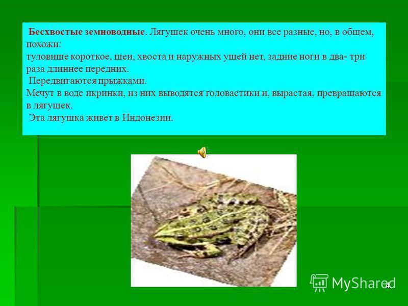 3 Гипотеза: если лягушку положить в молоко, то оно не прокиснет и будет таким свежим, как в холодильнике (историческое предание) – миф или реальность? Роль лягушек в обеспечении равновесия в природе достаточно велика. Однако их становится все меньше