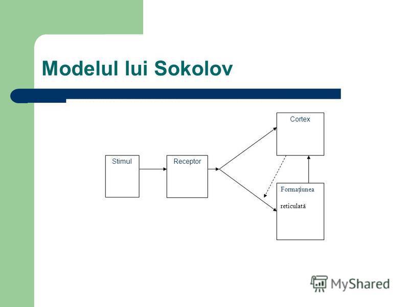 Modelul lui Sokolov StimulReceptor Cortex Formaţiunea reticulată