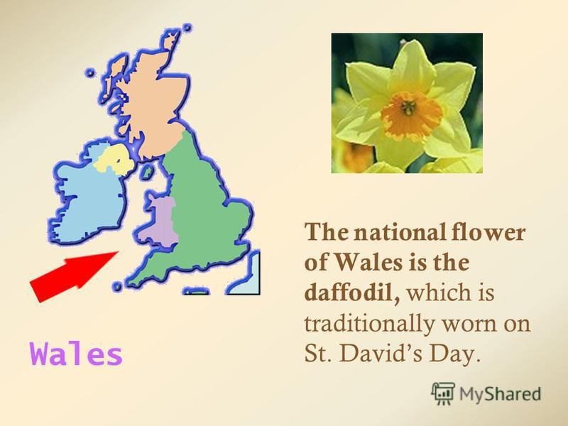 The national flower of Wales is the daffodil, which is traditionally worn on St. Davids Day. Wales